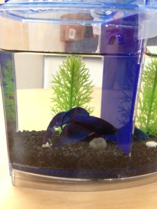 fish at preschool